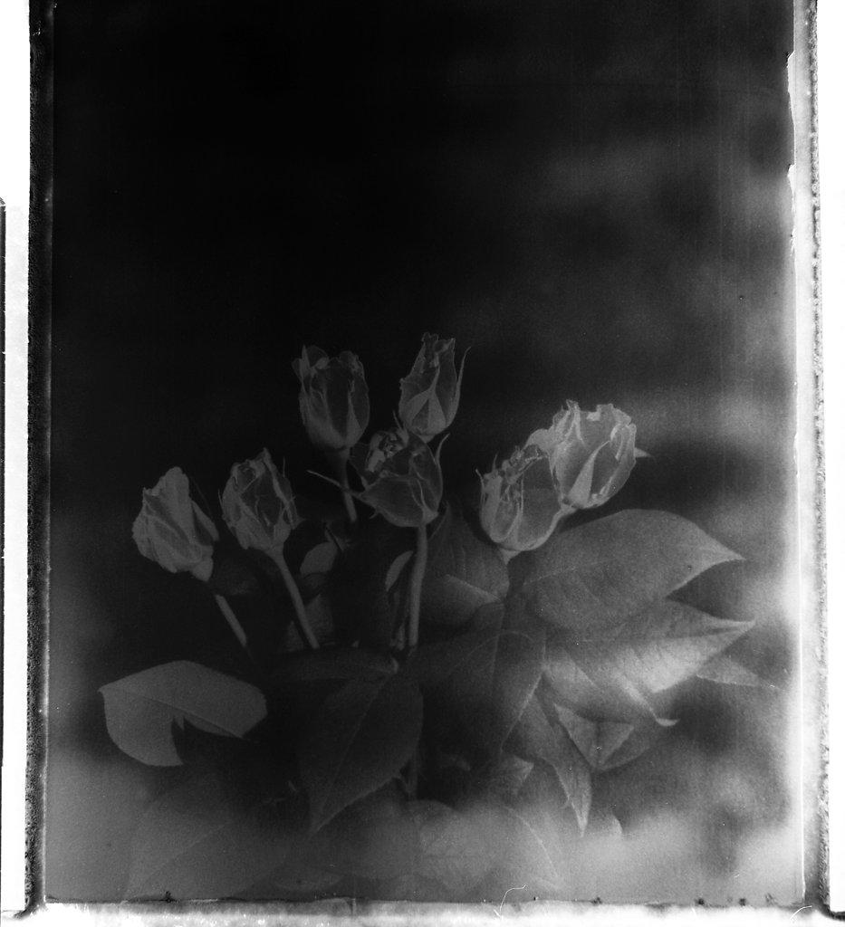 Roses Tatouées
